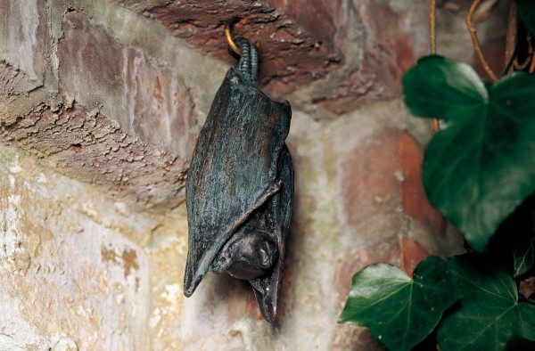 Schlafende Fledermaus Bronze Skulptur